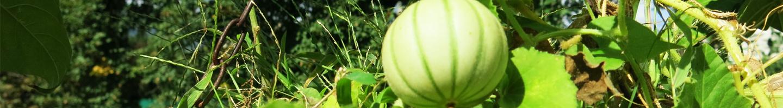 mais_jardin_des_plantes
