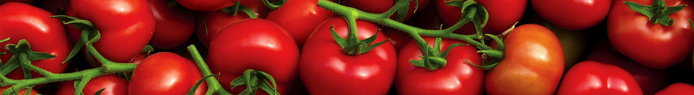 tomate_jardin_des_plantes