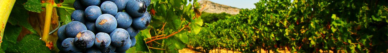 vigne_jardin_des_plantes